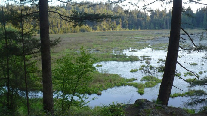 high knoll hiking trail, minnekhada, tri cities, coquitlam hikes, hikes near vancouver