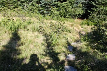 The stone path at the bottom of the wet meadow that was once Bills Tar Cove.
