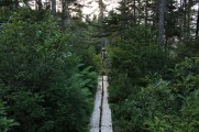 Boardwalk and lush greenery on the section between Calvert and Ferryland.