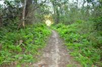 Dschungelwanderung in Vang Vieng