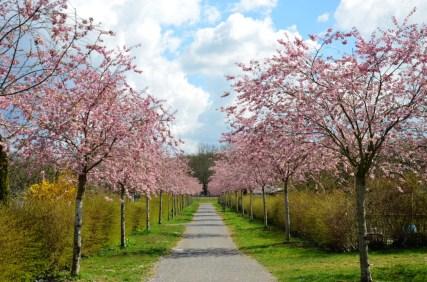 Frühlingsblüte - Der Weg
