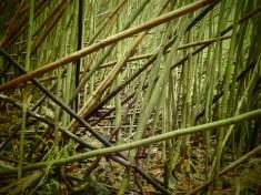 Bambuswald oder riesiges Mikadospiel