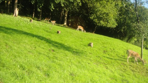 deer2015-09-01 07.34.22