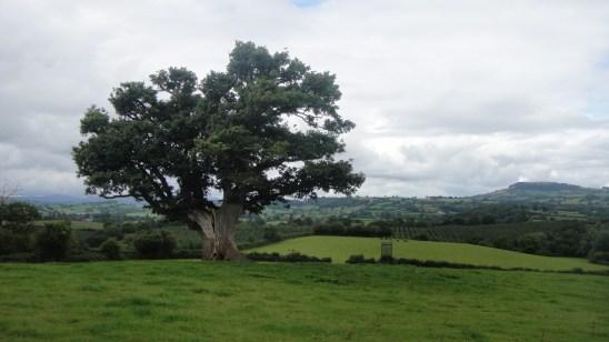 tree2015-09-02 23.59.00