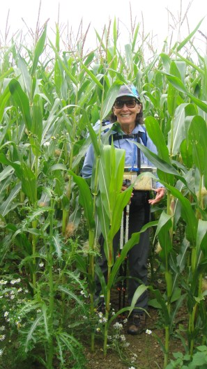 corn2015-09-08 23.19.18