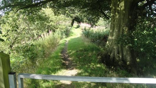 path2015-09-07 03.14.24