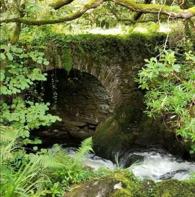 forest-bridge20180909_100555-2880166621-1548370248171.jpg