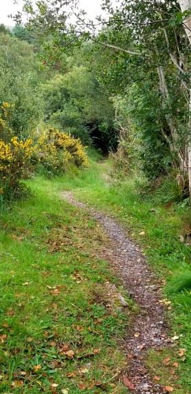 woodland path20180910_162022