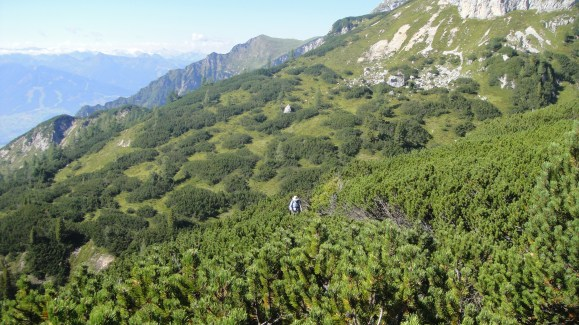 scrub forest
