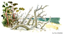 Jomfrugaard, Dueodde, trees faling into the water, Bornholm, Denmark. Watercolor
