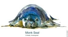 Critically endangered Monk Seal