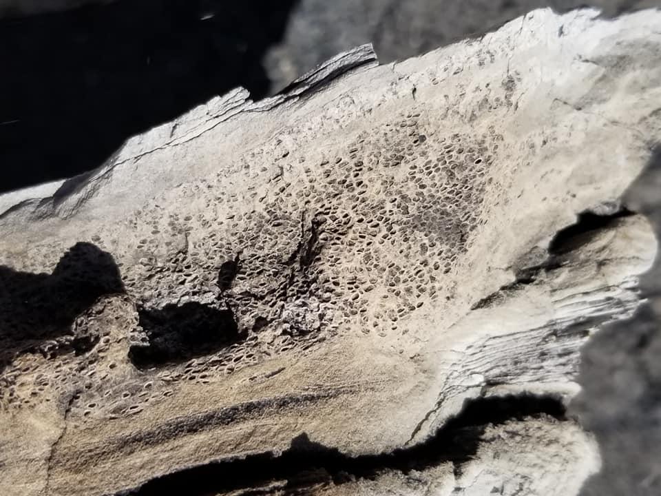 winton wyoming fossil wood petrified wood