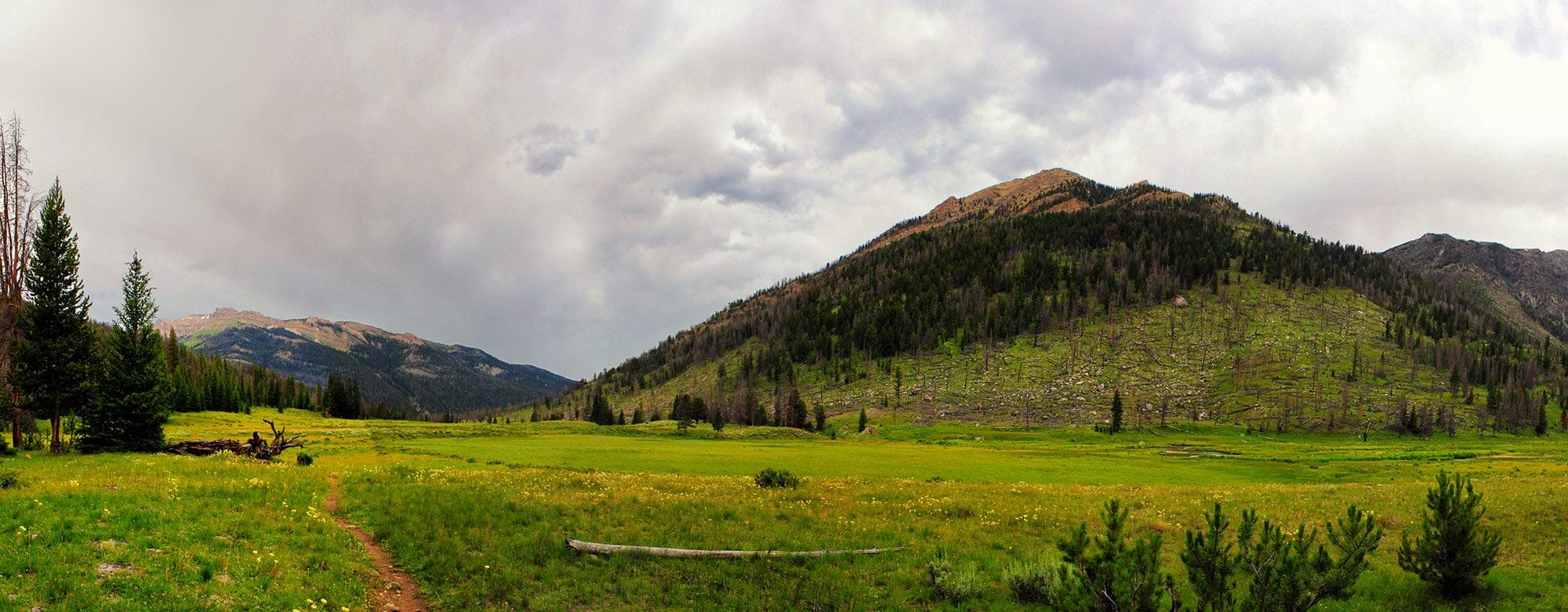 Clear Creek meadows