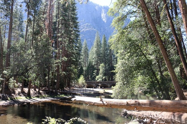 Peacefulness of Yosemite Valley