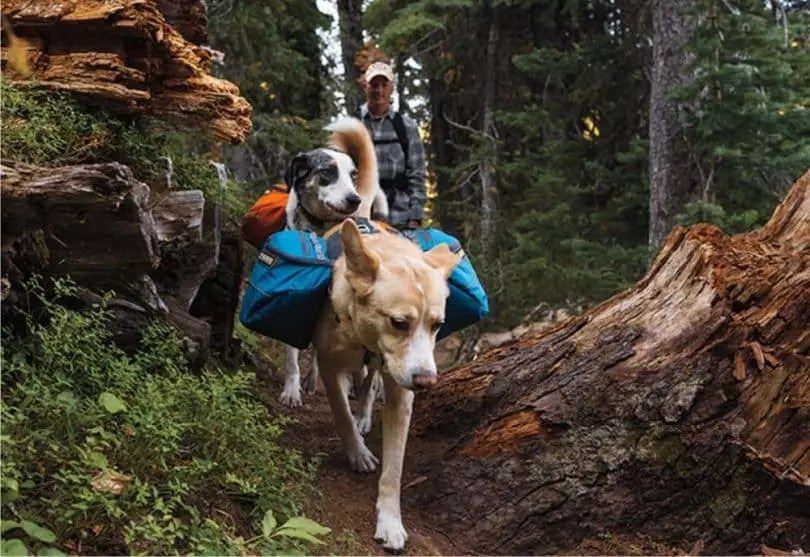 Image result for hiking dogs