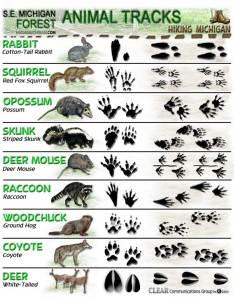 also latest animal tracks id sheets hiking michigan rh hikingmichigan wordpress