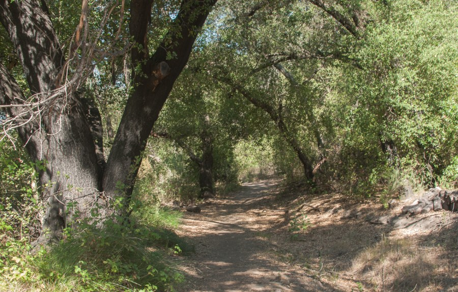 A shady hike through the oak trees