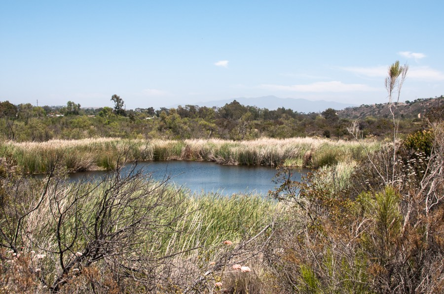 Le May pond in Otay Valley Regional park is a great spot for birdwatching