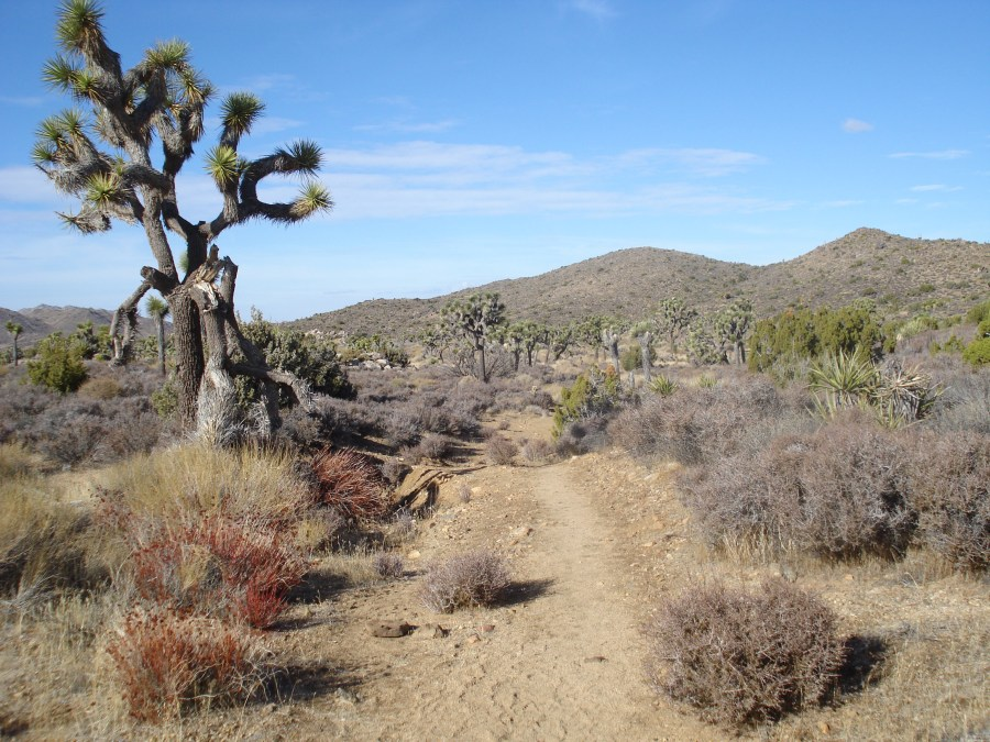 Trail in Joshua Tree national park