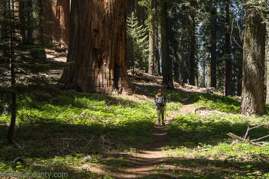Hiking the Muir Grove Trail in Sequoia National Park