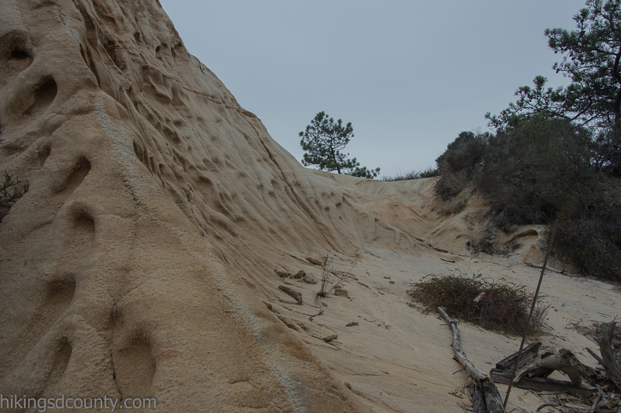 Wind sculpted sandstone at Torrey Pines Reserve