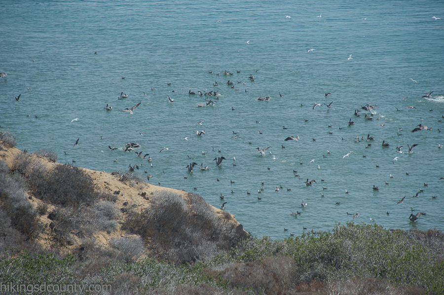 Shorebirds frolic in the San Diego Bay near Cabrillo National Monument