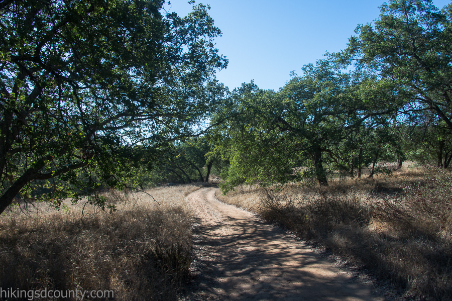 Oak trees along the trail side
