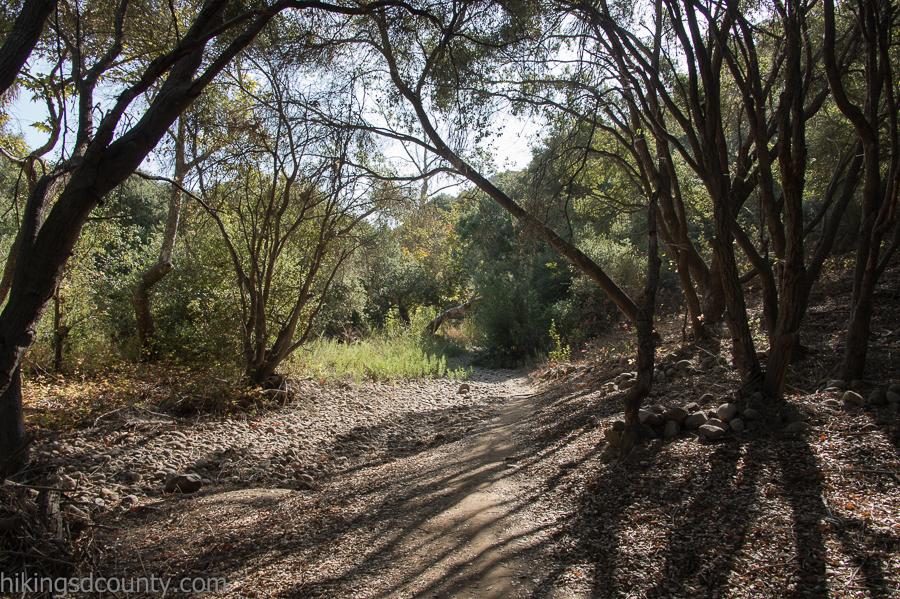 The Tecolote Canyon trail runs along the creek