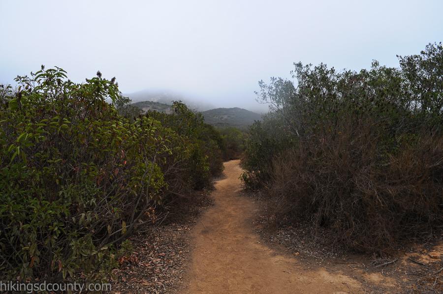 The Iron Mountain Peak side trail