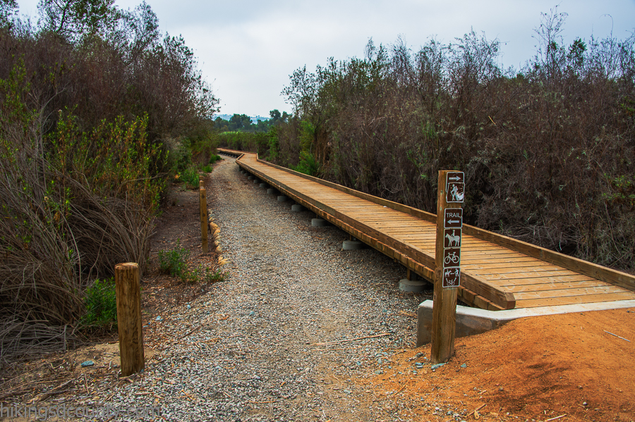 A wooden boardwalk takes you through the brush