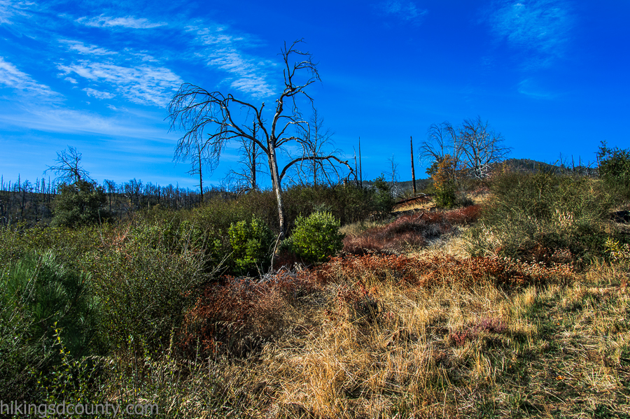 20141116CuyamacaPeak_DSC1137-Edit