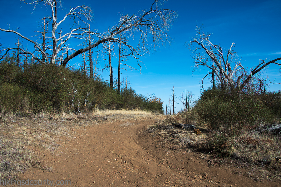 An unsigned dirt road