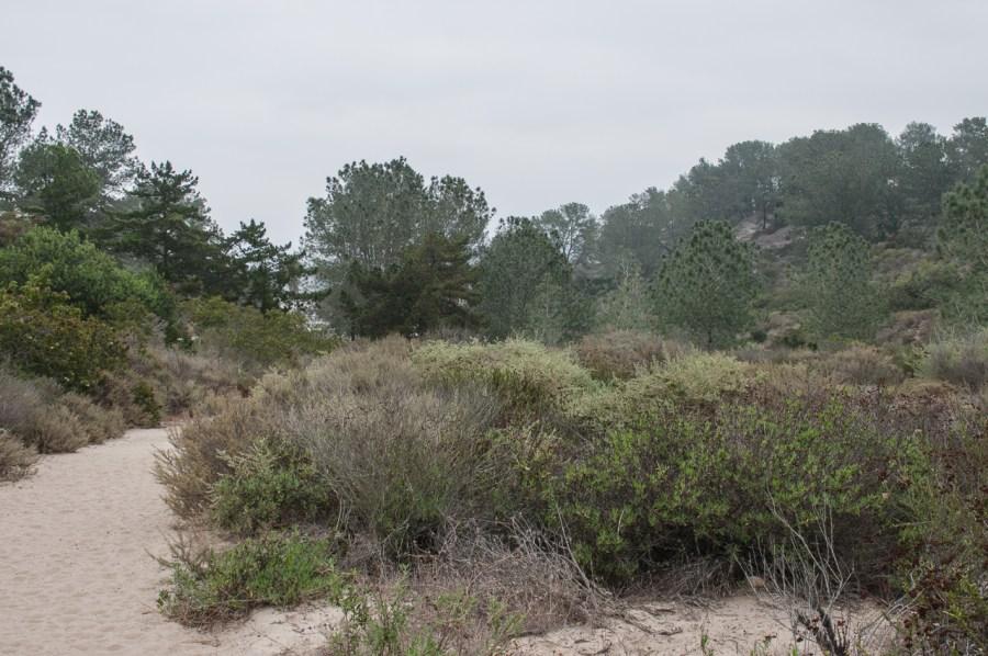 20150823DSC_2752Crest Canyon