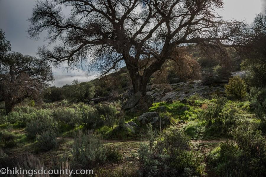 20160313_DSC0968-EditKitchen Creek Fall