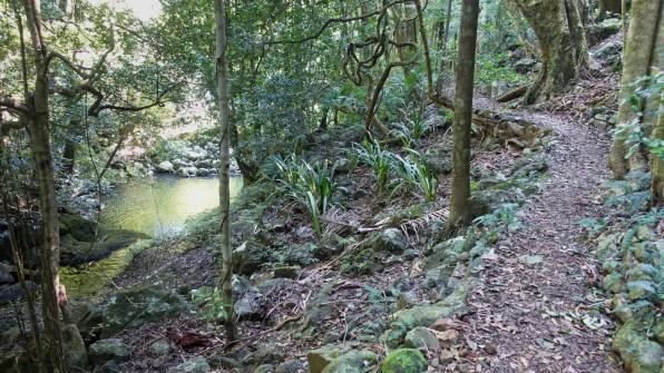 Coomera River near the Gwongorenda Falls (Lamington National Park)