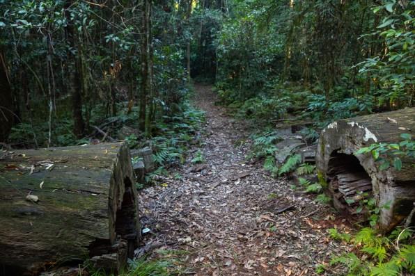Rocky Crossing Track, Barrington Tops