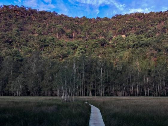 Grassland near Calna Creek