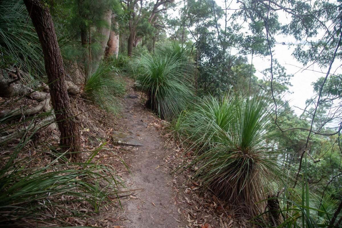 img 3490 lr Guide to West Head bushwalks