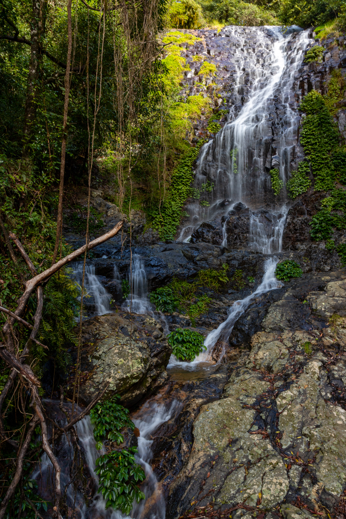 Tristania Falls