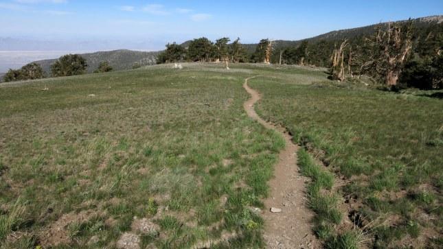"""""""The Meadows"""" - path follows a long ridge to Mt Charleston summit"""