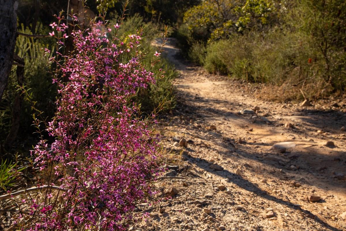 img 6648 lr Heath Trail and Bare Creek Loop (Garigal NP)