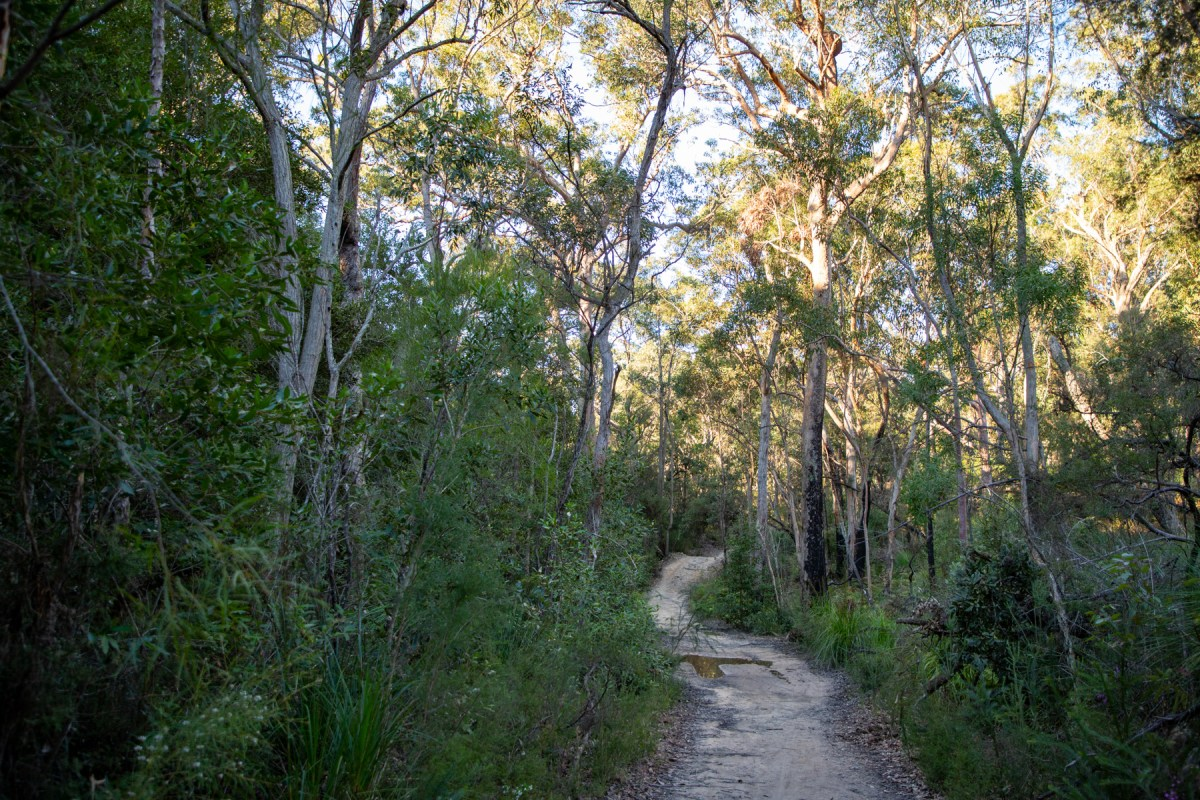 img 6654 lr Heath Trail and Bare Creek Loop (Garigal NP)