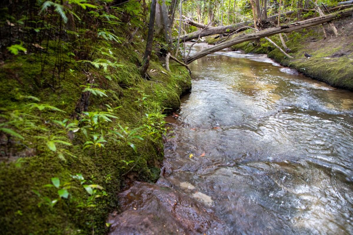 img 6658 lr Heath Trail and Bare Creek Loop (Garigal NP)