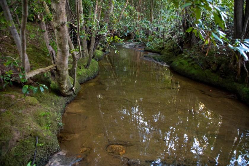 img 6661 lr Heath Trail and Bare Creek Loop (Garigal NP)