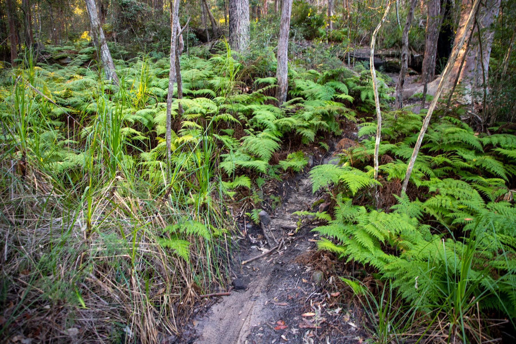 img 6667 lr Heath Trail and Bare Creek Loop (Garigal NP)