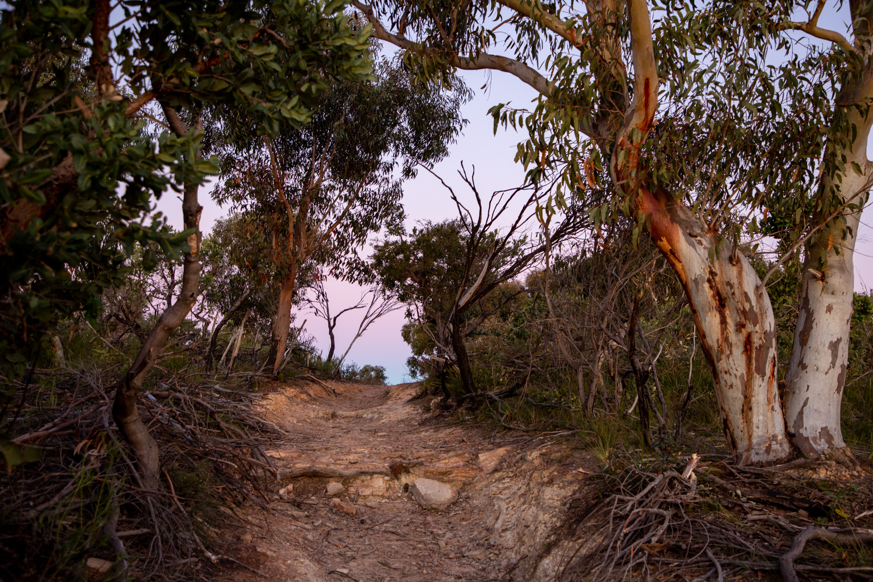 img 6762 lr Heath Trail and Bare Creek Loop (Garigal NP)