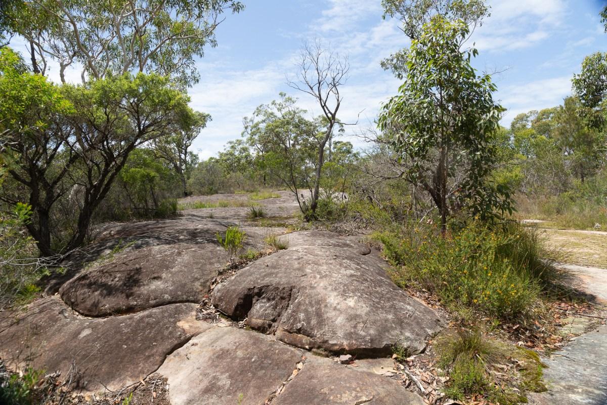 awat7676 lr Tassie Tigers & River Monsters on the Milyerra Trail