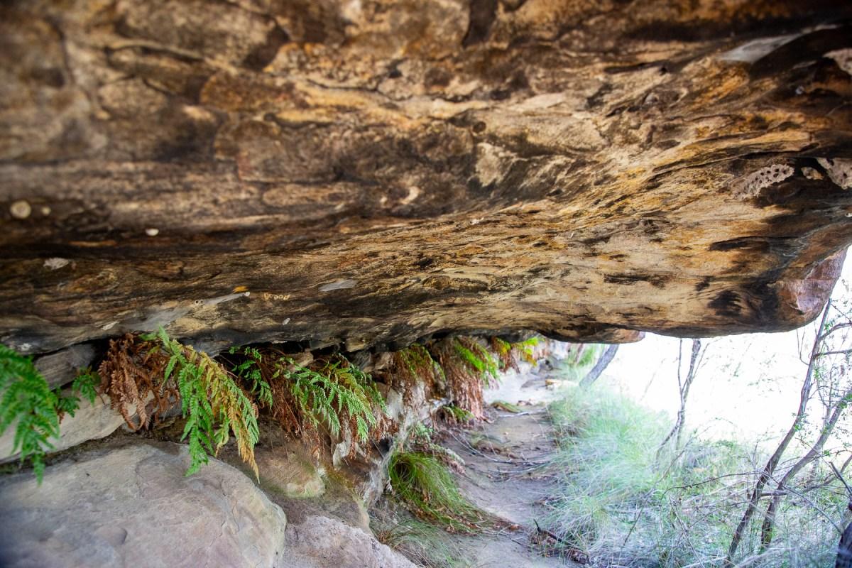 awat8801 lr Myall Trail - Art Shelter