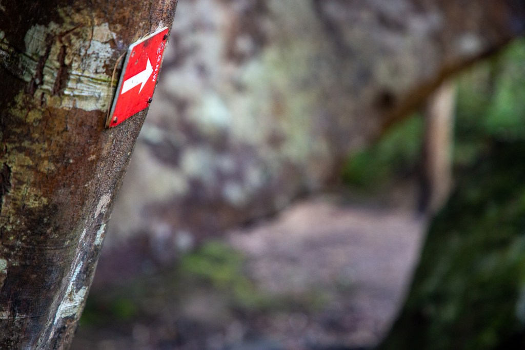 AWAT2455 LR Taffys Rock