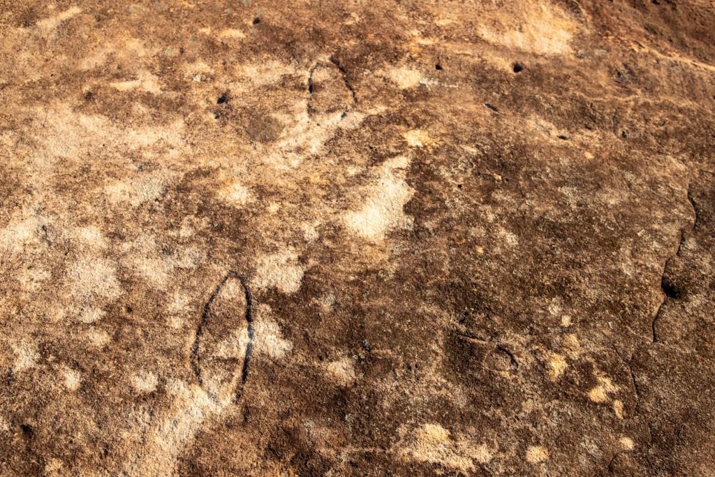IMG 4952 LR Long Trail East (Roach Trig)